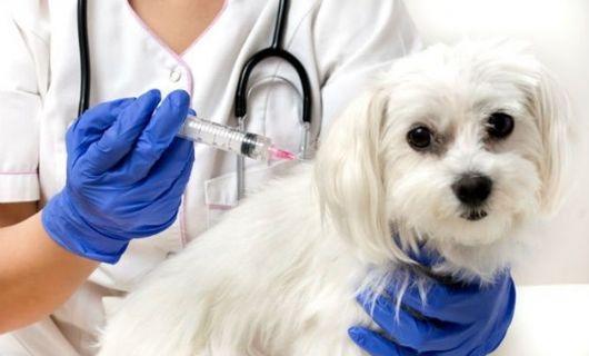 Vacinação antirrábica em cães e gatos acontecerá em Confresa no sábado (02 de outubro)