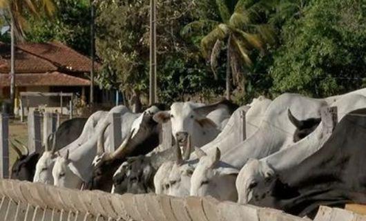 Suspensão da carne bovina para China pode causar prejuízo de R$ 500 milhões aos pecuaristas em MT
