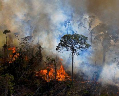 Alerta de desmatamento na Amazônia Legal em maio é o maior desde 2016