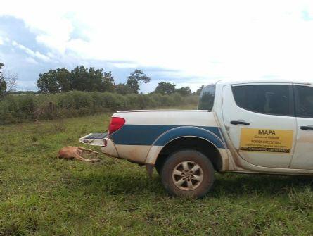 Nove cabeças de gado morrem de raiva bovina em Água Boa
