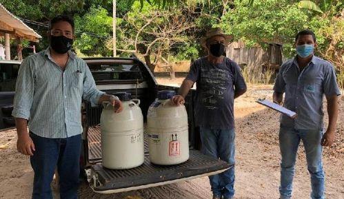 Produtores de Porto Alegre do Norte tem acesso a melhoramento genético para incrementar rebanho leiteiro