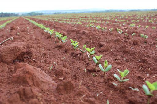 Nota: Canarana dá início ao plantio de soja, mas produtores aguardam melhores condições hídricas