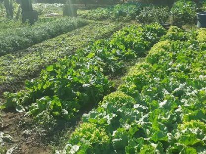 Horta comunitária de Canarana ajuda a complementar renda de 23 famílias