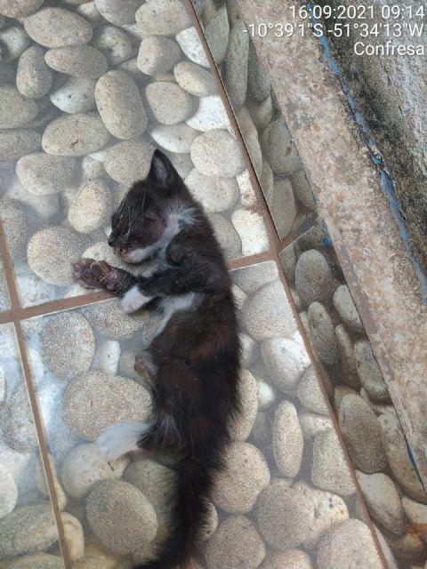 Bombeiros resgatam filhote de gato que estava preso entre paredes de residência em Confresa