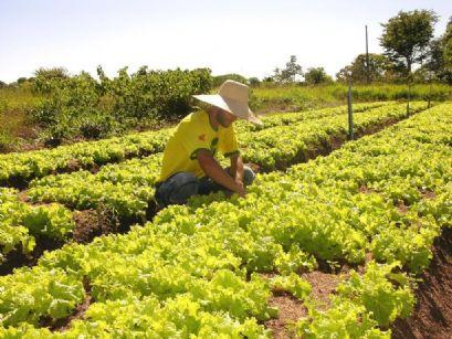 Confresa e Alto Boa Vista recebem primeira parcela do Programa Fomento Produtivo