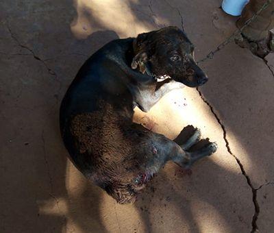 Pitbulls são mortos a tijoladas após atacarem cachorro em residência de Canabrava do Norte
