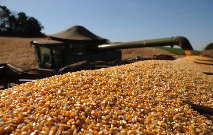 Médio e Baixo Araguaia terá nesta safra a terceira maior área com milho do Mato Grosso