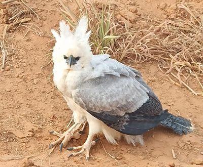 Ave ameaçada de extinção é fotografada por produtor rural próximo ao rio Daro em Querência