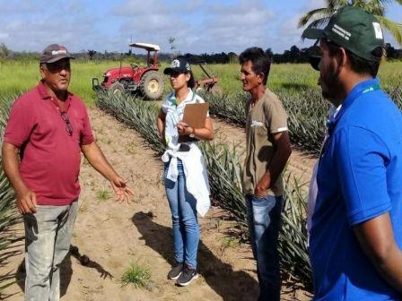 IFMT de Confresa abre edital para formação em Agricultura e Pecuária com base agroecológica