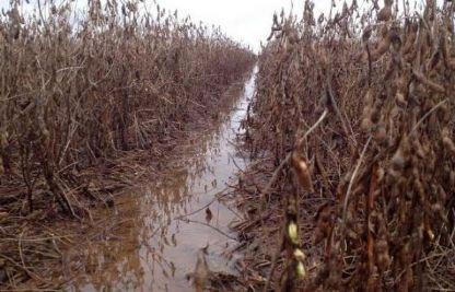 Chuva em excesso provoca prejuízos na colheita das lavouras de soja do Araguaia