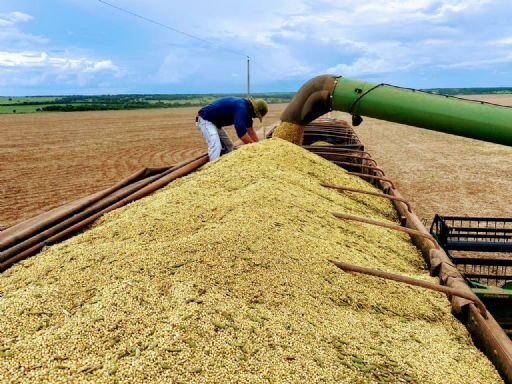 Produção, chuva e filas, aumentam o frete em mais de 50% na região de Canarana