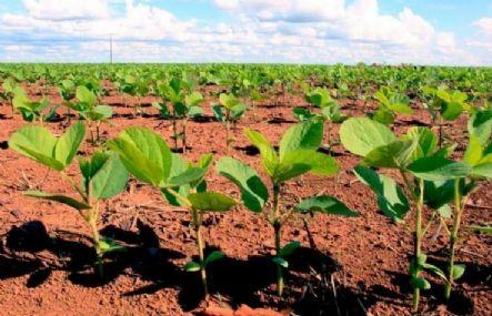 Agricultores concluem plantio de lavouras de soja em Água Boa, mas clima preocupa